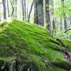 Swell Mountain Retreat Tour 013
