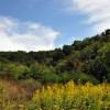 cashs-hill-forest-tour-002