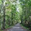 cashs-hill-forest-tour-003