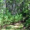 cashs-hill-forest-tour-004