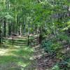 cashs-hill-forest-tour-006
