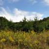 cashs-hill-forest-tour-007