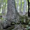 cashs-hill-forest-tour-008