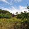 cashs-hill-forest-tour-009
