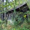 cashs-hill-forest-tour-012