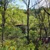 cashs-hill-forest-tour-013