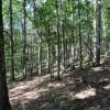 cashs-hill-forest-tour-014