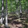 cashs-hill-forest-tour-015