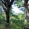 cashs-hill-forest-tour-016