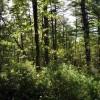 cashs-hill-forest-tour-017