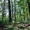 cashs-hill-forest-tour-018
