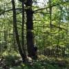 cashs-hill-forest-tour-019