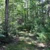 cashs-hill-forest-tour-020