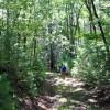 cashs-hill-forest-tour-021