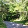 cashs-hill-forest-tour-022