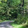 cashs-hill-forest-tour-023
