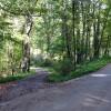 cashs-hill-forest-tour-024