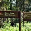cashs-hill-forest-tour-025