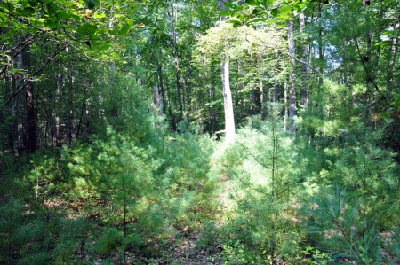 06-highland-springs-lot-3