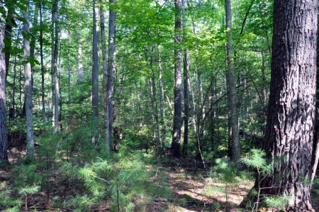 07-highland-springs-lot-3