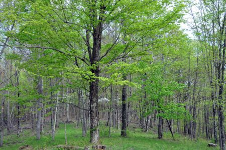 elk-knob-forest-tour-003