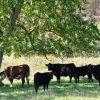 lugar-springs-farm-tour-013