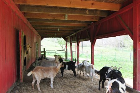 Carroll Farm on Muddy Creek Tour 011