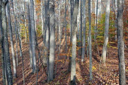 Wolf Creek Retreat 066