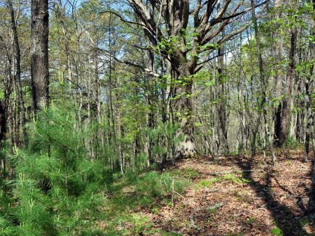 Cape Reed Forest 024
