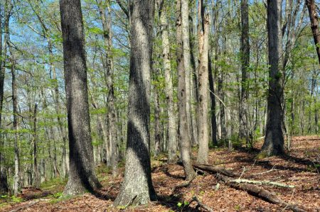 Cape Reed Forest 034