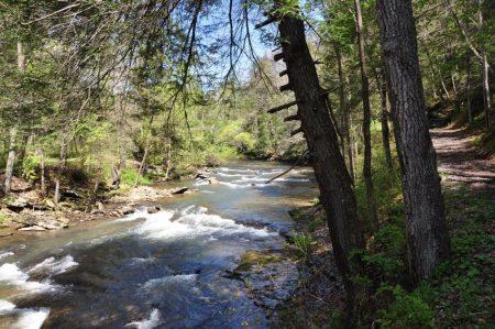 Roaring River 004