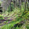 Roaring River 028