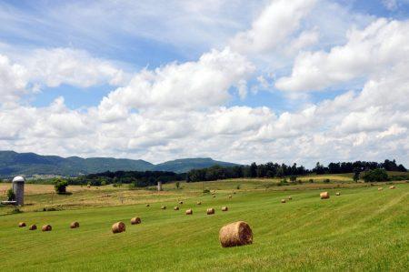 Shiflet Farm Tour 002