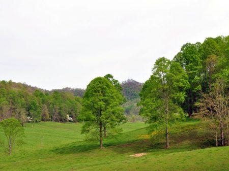 Green Fields Farm 011
