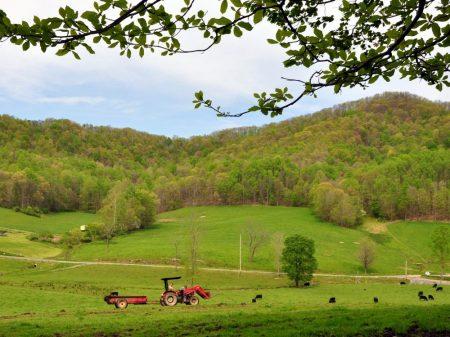 Green Fields Farm 012