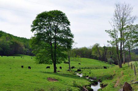 Green Fields Farm 014