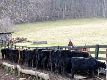 Green Fields Farm 016