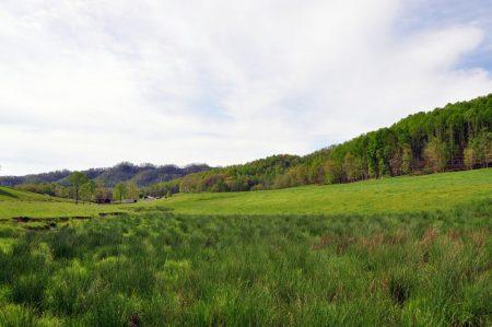 Green Fields Farm 020