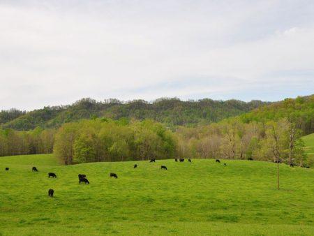 Green Fields Farm 021