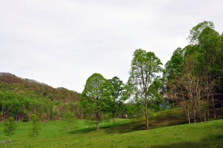 Green Fields Farm 028