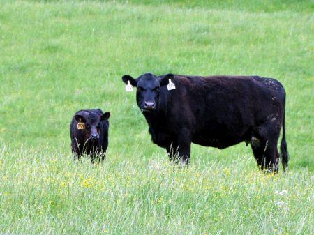 Green Fields Farm 037