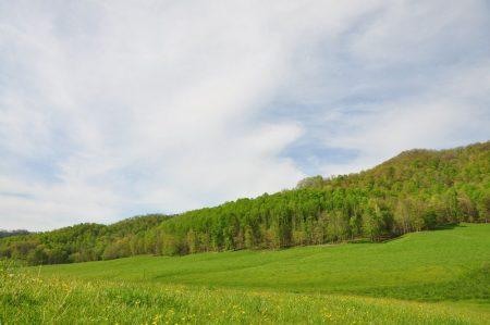 Green Fields Farm 041
