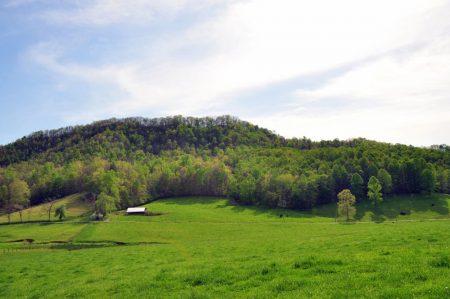 Green Fields Farm 043