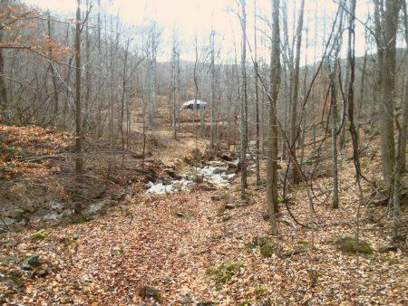 Owens Branch Forest 003