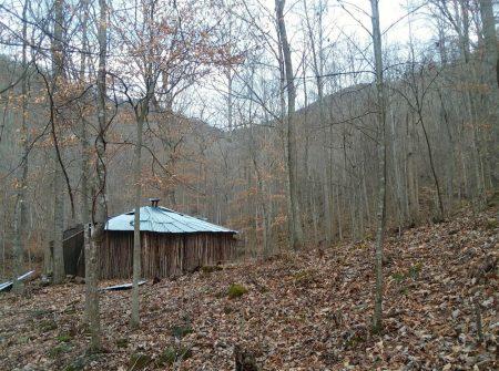 Owens Branch Forest 004
