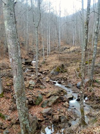 Owens Branch Forest 005