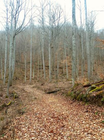 Owens Branch Forest 006
