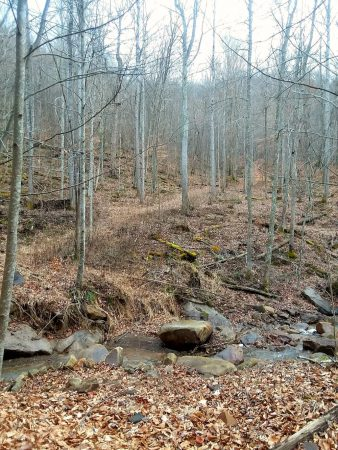 Owens Branch Forest 007