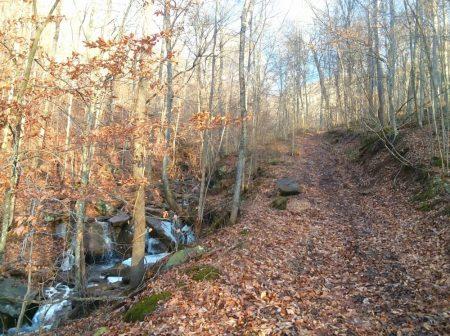 Owens Branch Forest 012