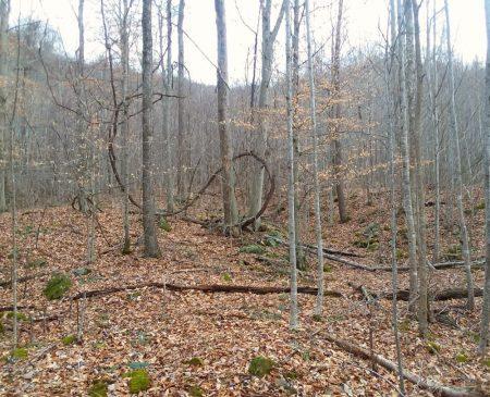 Owens Branch Forest 013